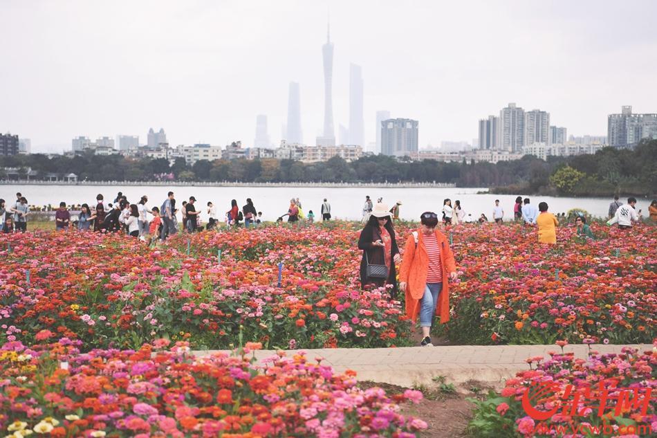 广州海珠湖公园鲜花盛放 花海吸引大批游客
