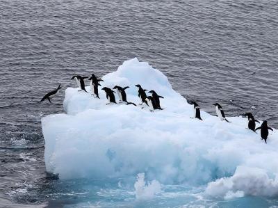 南极西冰架的冰山与动物世界