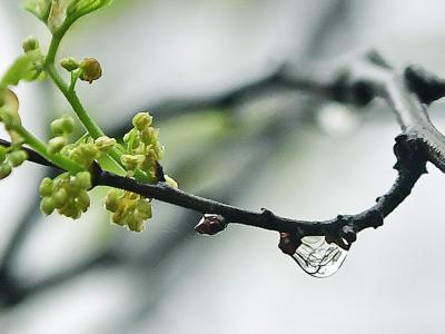 城里春天的雨珠