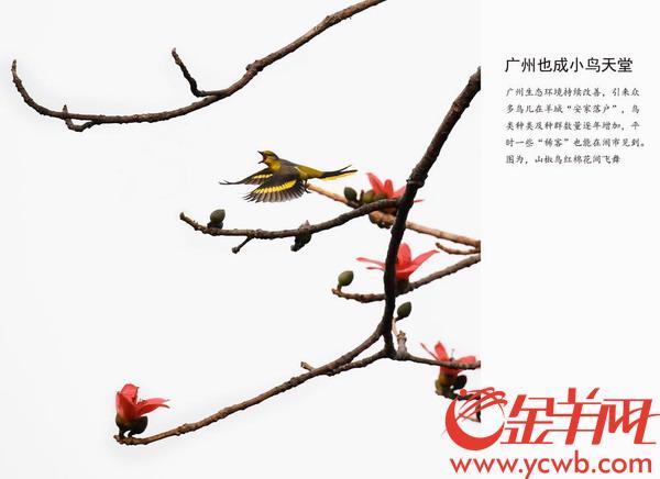 自然及环境类 组照 二等奖作品 【广州也成小鸟天堂】 羊城晚报 陈秋明 摄
