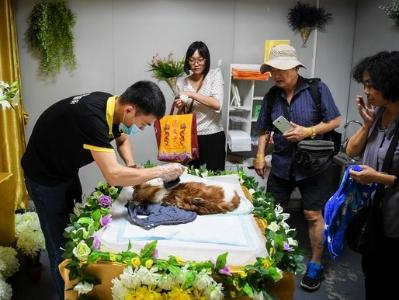 宠物殡葬——让每个生命都有尊严地离去