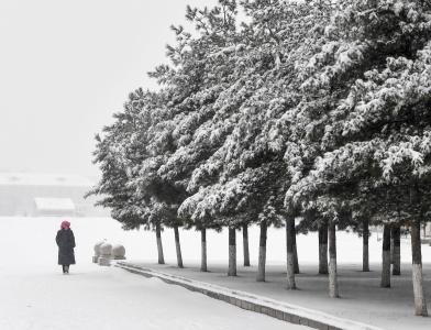 吉林长春:春分时节雪纷纷