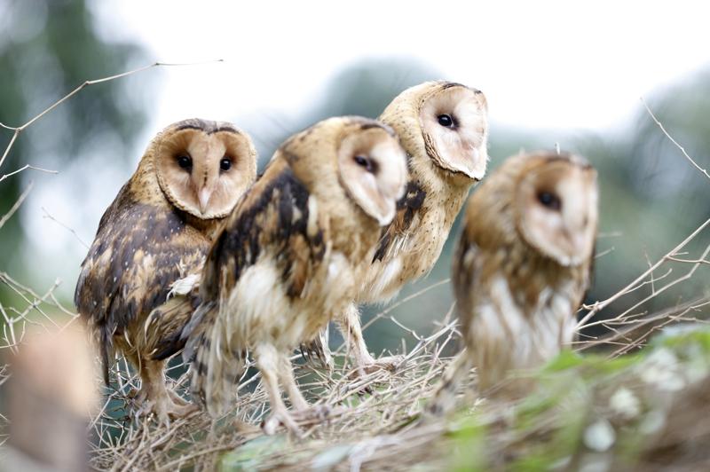 3月24日,广州长隆野生动物世界成功繁育的珍稀鸟类猴面鹰首次与游客见