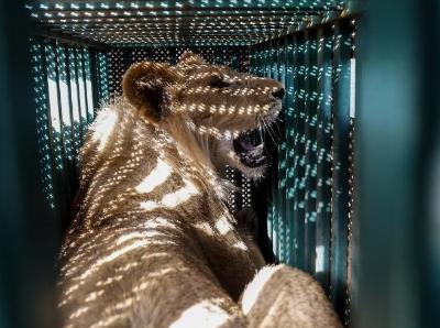 加沙一動物園瀕臨倒閉 動物獲慈善機構營救