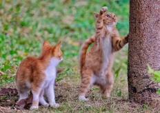 广州城里的猫