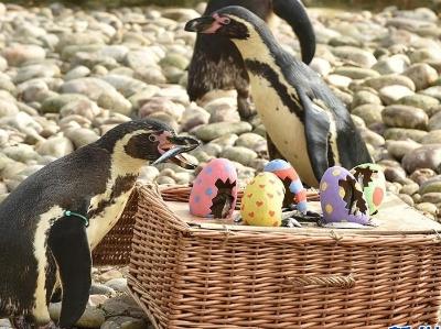 """复活节将至 伦敦动物园小动物获赠精美""""彩蛋""""大餐"""