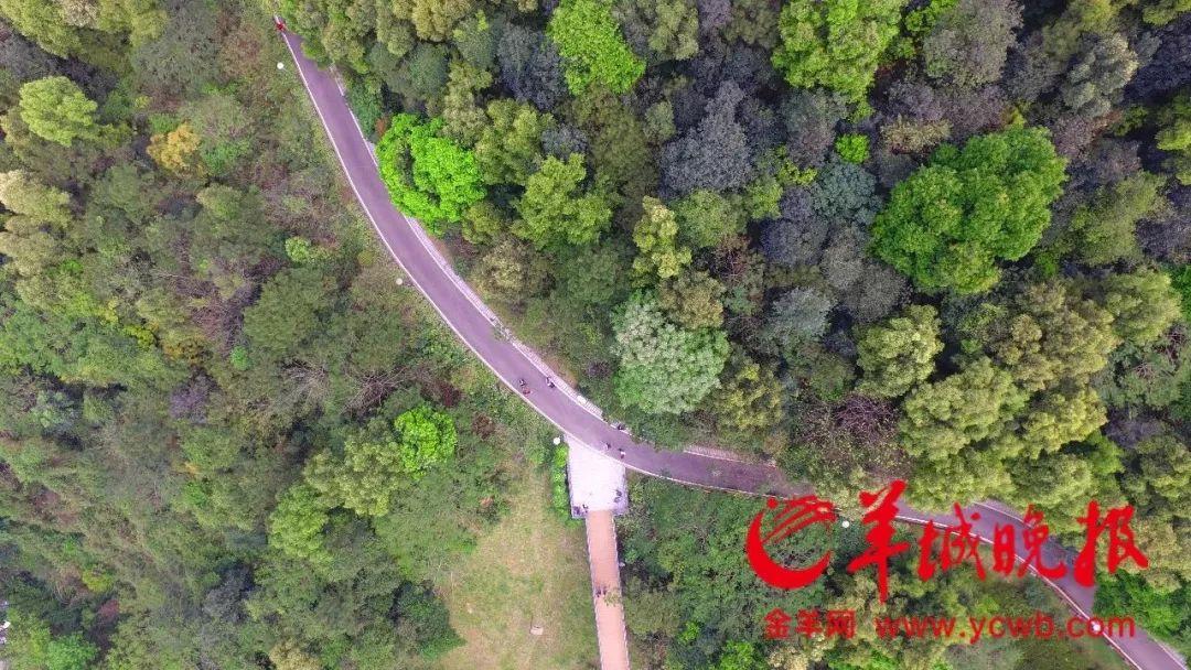 靓爆!高清航拍,广州最美绿道都在这