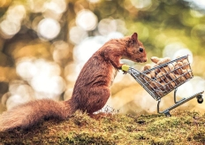 """英国摄影师拍摄松鼠推""""购物车""""趣味瞬间"""