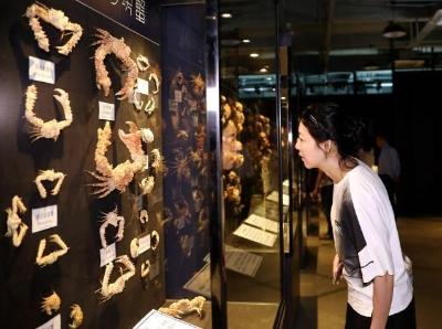 螃蟹博物馆落户厦门文艺渔村