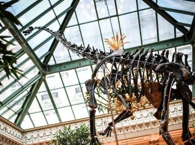法国一酒店展出近13米长恐龙化石 估价或达180万欧元