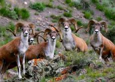新疆博州:野生動物暢遊花海綠草間