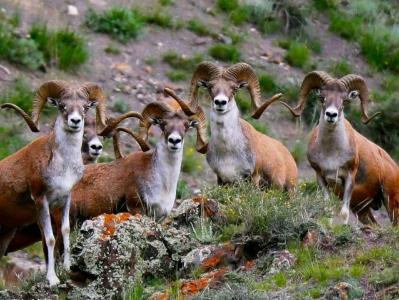 新疆博州:野生动物畅游花海绿草间