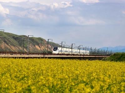 兰新高铁动车穿越最美油菜花海