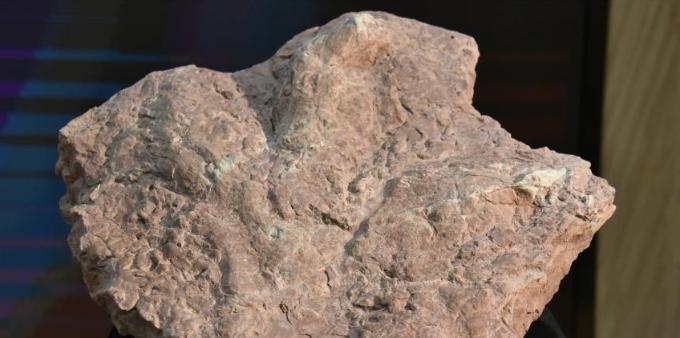 亚洲首例霸王龙足迹收藏于福建南安