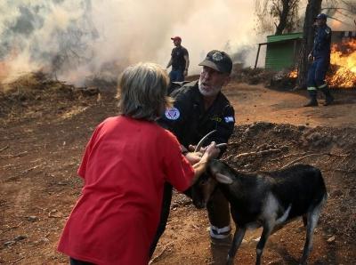 希腊埃维亚岛山火凶猛 森林被烧毁