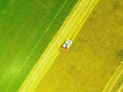 """湖南双峰:再生稻""""一种两收"""" 助力农民增产增收"""