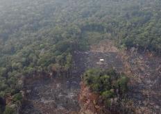 """""""地球之肺""""火灾频发 航拍亚马逊雨林遭砍伐景象"""