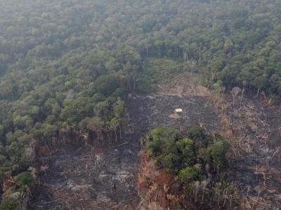 """""""地球之肺""""火災頻發 航拍亞馬遜雨林遭砍伐景象"""
