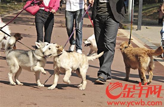 东莞拟规定若犬只伤人不送诊 最高或罚款5000元