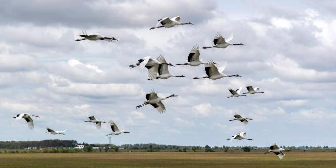 扎龙湿地:鹤舞翩翩生态美