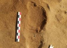 法国发现尼安德特人脚印 为研究史前人类社会提供线索
