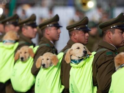 智利举行阅兵式庆祝独立日 小奶狗成抢镜王