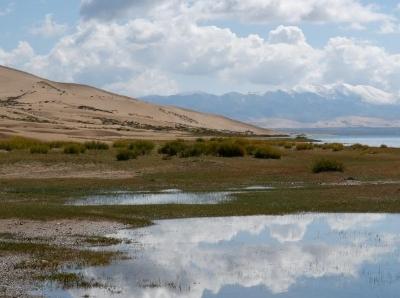 青海湖沙島關停兩年 生態恢復漸有綠意