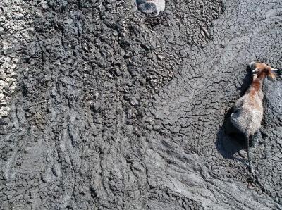 博茨瓦纳遭遇几十年来最严重干旱 动物在泥潭中求生