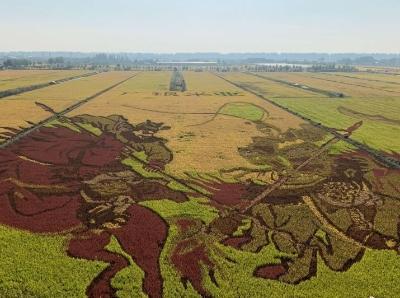 寧夏巨幅稻田畫繪就豐收顏色