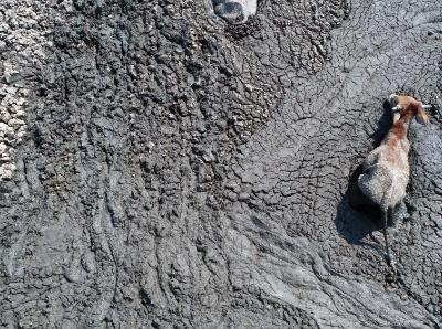 博茨瓦納遭遇幾十年來最嚴重幹旱 動物在泥潭中求生
