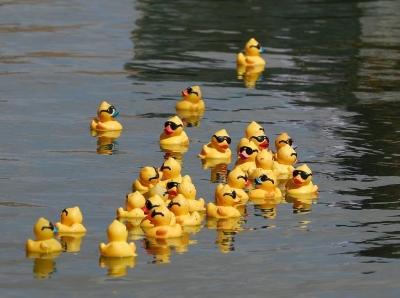 """美国北加州小城举办小黄鸭""""游泳比赛"""""""