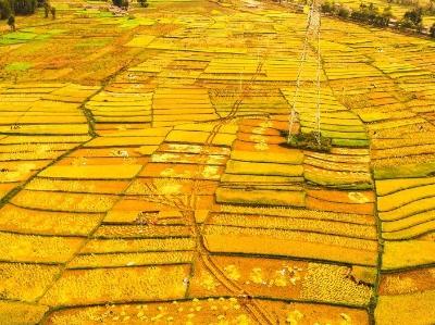 金色的四川大凉山