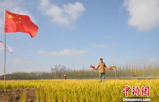 �m州新�^�}�A地水稻��N成功 金秋�_�引民���相
