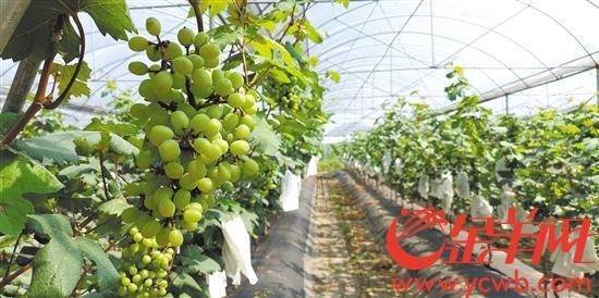 高栏南水大力发展现代农业 绿色助推乡村振兴