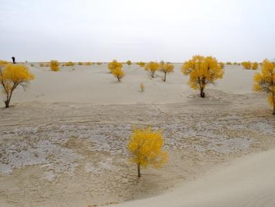 航拍塔克拉瑪幹沙漠 胡楊如詩如畫