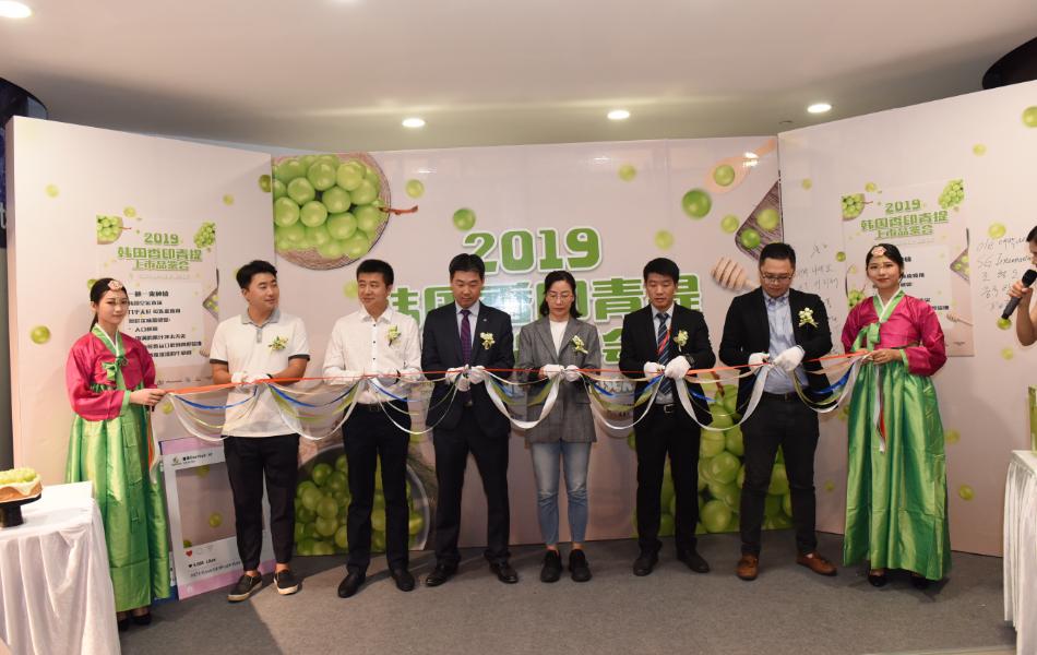 韩国香印青提迎上市高峰成国人餐桌新选择