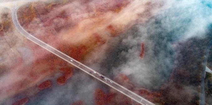 江苏淮安天泉湖水杉林一片红色 色彩鲜艳如油画
