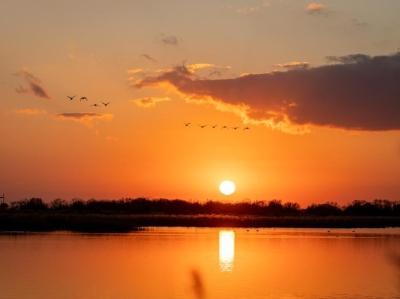 候鸟天堂黄河入海口