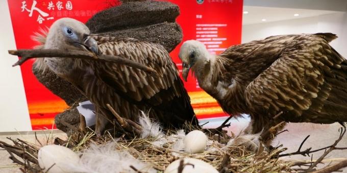 中国野生动物保护成果展在京举办