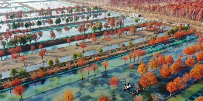 江苏泗洪:美生态 鼓口袋