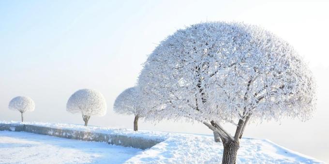 吉林城区迎来今冬首场大面积雾凇奇观