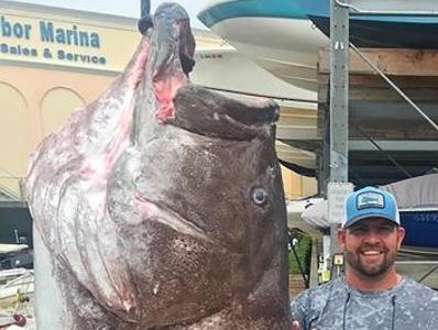 鱼比人高!美国佛罗里达钓起350磅石斑鱼