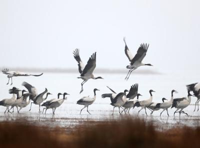 貴州威寧:鶴舞草海