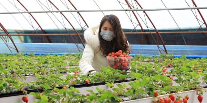 新疆博湖:防疫农时两不误