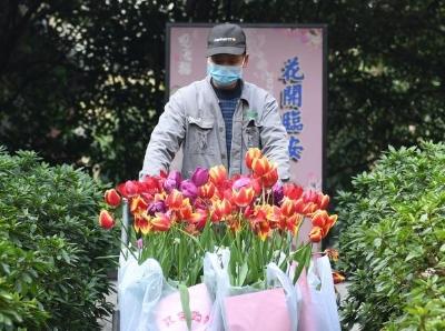 """杭州西湖3000余盆鮮花送抗""""疫""""前線"""