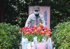 """杭州西湖3000余盆鲜花送抗""""疫""""前线"""