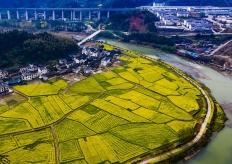 湖南怀化:油菜花开满地黄