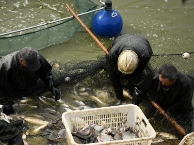 江苏淮安:鱼跃人欢销售忙