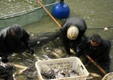 江蘇淮安:魚躍人歡銷售忙