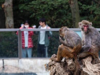 成都动物园恢复开放 每天限流3000人次